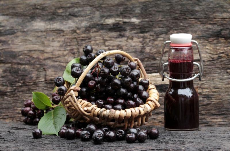 arónia čierna - plody a šťava