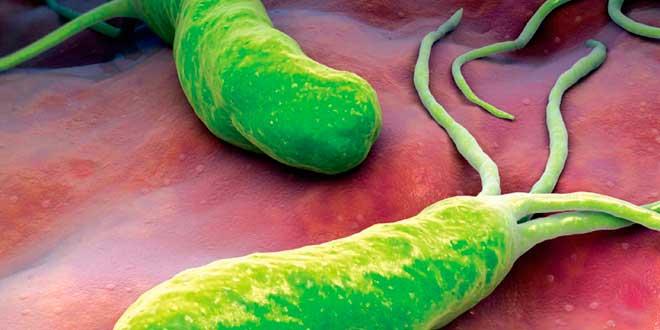 helikobaktér - žalúdočné problémy