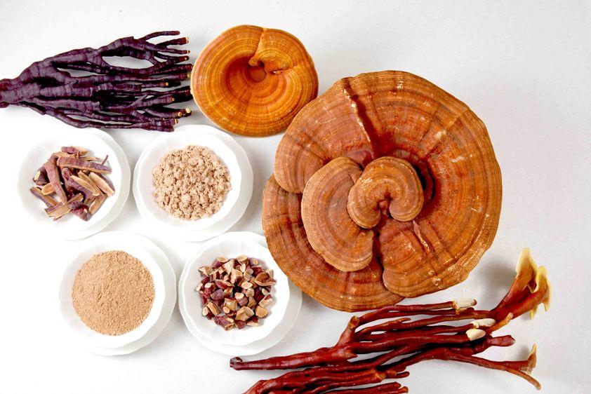 reishi ganoderma - stará čínska medicína